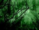 自然音 夜の森の音