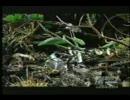 カマキリvsヘビ
