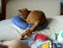 子どもをあやす猫