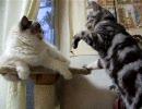 【レオ★ララ】 猫にお願いする猫