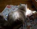 チラシ見せない~猫(^_^;)