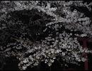 【ニコニコ動画】2010年の桜を見てみようを解析してみた