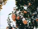 【grapevine】青春メドレー【やっぱ最高】