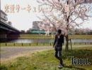 【kuu.】恋愛サーキュレーション踊ったよ!【お花見】