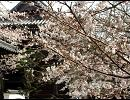 【ニコニコ動画】咲くときもあれば散るときもあって、また咲くんだよを解析してみた