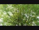 自然の写真でスライドショー