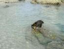 デブネコぱぴこ: 泳ぐ猫 海へジャンプ!