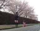 【ニコニコ動画】【きょーや】桜の木の下でBad Apple!!とか踊ってみた【きなこ】を解析してみた