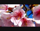 【茨城】 [日立] 平和通り~かみね公園 2010(春)