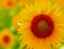 薄桜鬼 MAD -太陽の花-