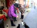 お祈り猫 こがねちゃん