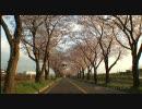 桜並木の春2010.3.31~4.25 ♪ BIRTH /  KOKIA