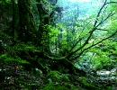 【ニコニコ動画】深緑【フリーソフト「テキスト音楽サクラ」で作曲してみた】を解析してみた
