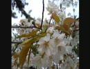 【ニコニコ動画】【オリジナル】 花鳥風月 【インスト】を解析してみた