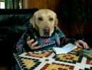 犬と二人羽織してみたよU・ω・)ノシ thumbnail