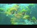 【ニコニコ動画】【オリジナル曲】fish in aquarium & human by ameを解析してみた