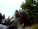 【ニコニコ動画】ハゲワシの前で死んだ振りしてみたを解析してみた