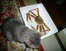 ギャグマンガ日和 猫写真で