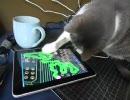【萌えたら死亡】 iPad vs ぬこ