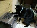 空気清浄機と戦う猫