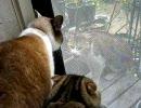 飼猫vsカタギに見えない野良猫