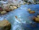 柴犬の川遊び 激流編