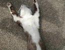 うちの猫のありえない映像 thumbnail