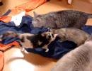 家猫日和 つなぎ2