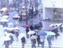 雨の慕情 歌/初音ミク