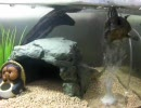 【ニコニコ動画】水作のブクブクで遊ぶミシシッピニオイガメを解析してみた