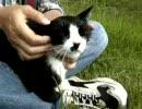 【ニコニコ動画】野良猫と静かに流れる時間を解析してみた