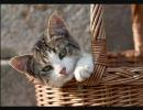 可愛い猫画像でまったりと。
