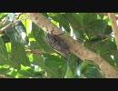 【ニコニコ動画】庭のクマゼミを撮ってみたを解析してみた