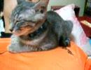 猫がヒトの上で寝るんです