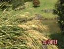 夏から秋へ 小石川植物園