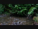 【ニコニコ動画】【癒し】ひぐらしの鳴き声【小川にて】を解析してみた