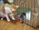 つっぱしる猫 音量極めて注意