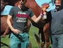 【ニコニコ動画】馬の搾りたて精液を飲む動画を解析してみた