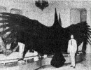 【ニコニコ動画】【UMA】巨大生物紹介を解析してみた