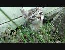 【ニコニコ動画】会社の物置下にいる子猫を盗撮を解析してみた