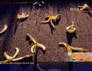 ミリオンモンキーズ 初期装備で最高難易度(スペクター編) 3 thumbnail