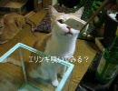【ニコニコ動画】【4匹と独りキッチン】焼肉を解析してみた