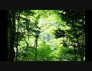 250TR のんびりバイクツーリングvol3 夏の風景編(軽井沢)