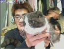 【ニコニコ動画】【peercat】神聖かまってちゃん ネオニー動画(1/2)を解析してみた