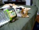 ペットボトルをかじる犬