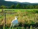【ニコニコ動画】【ニコニコインディーズ/インスト】草食どうぶつの日々【雑音】を解析してみた