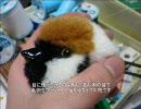 【ニコニコ動画】【大神】スズメを作ってみた【ぬいぐるみ】を解析してみた