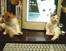 第61位:おらほの猫ら ~作業できない~