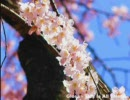 【元気が出る】春の一日を音楽で表現してみた