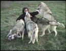 オオカミに愛されるカメラマン